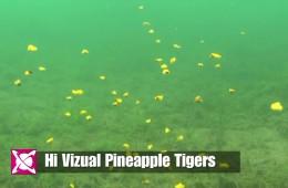CC Moore Hi Vizual Tiger nuts