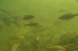 Yellow Submarine 1 underwater footage