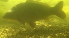 Yellow Submarine 2 underwater footage